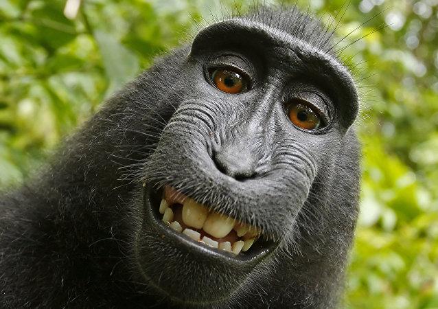 英国摄影师赢得猴子自拍照版权