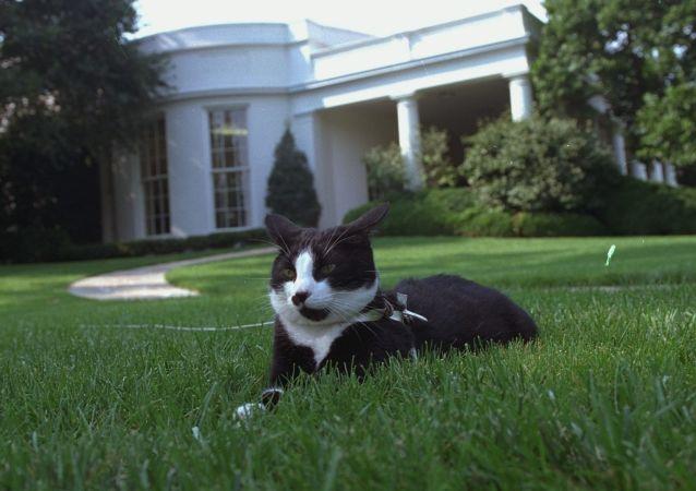特朗普找11岁的孩子为白宫修剪草坪