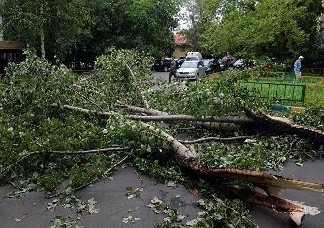 莫斯科飑风刮倒150多棵数 砸坏8辆汽车
