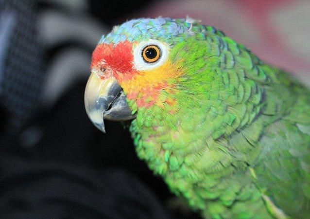 鹦鹉模仿主人声音在网上成功下单