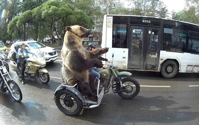 棕熊淡定坐摩托?我可能看到了一只假熊