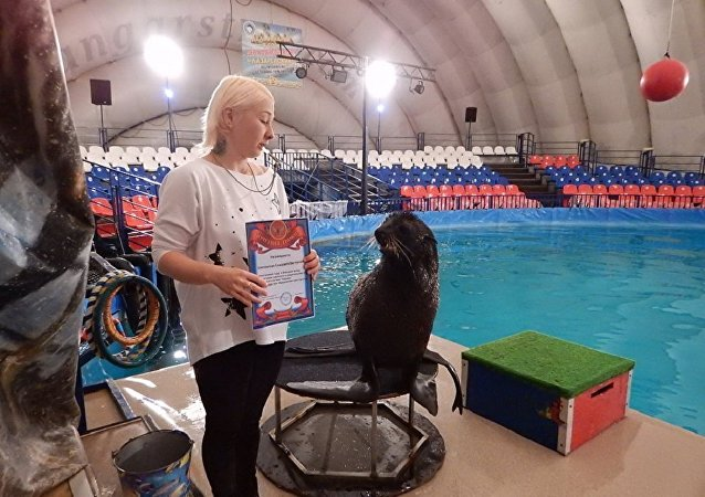 圣彼得堡警方为抓住不法分子的海狗颁发奖状
