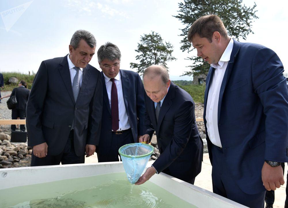 俄罗斯总统普京在贝加尔湖国家自然生物圈保护区出席白鲑鱼苗放生仪式。