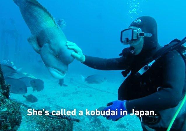 Японский дайвер подружился с рыбой