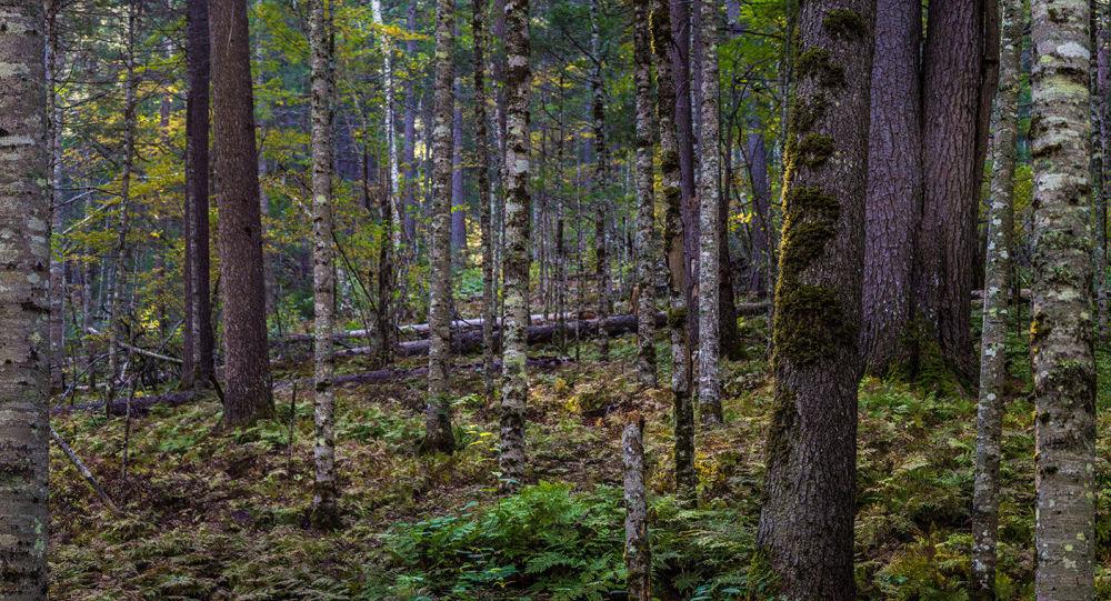 中國將為托木斯克州木材生產投資4.3億美元
