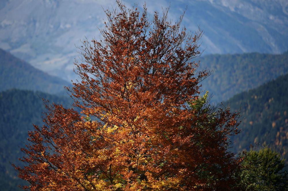 法國阿爾卑斯山上的落葉