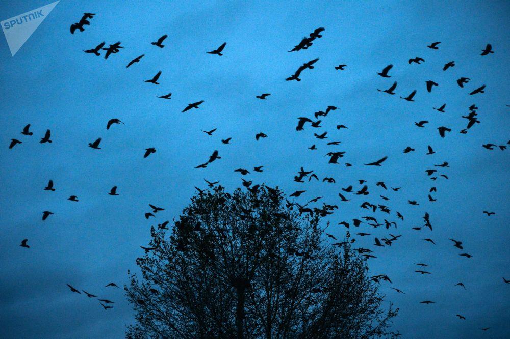 俄羅斯克麥羅沃州的飛鳥