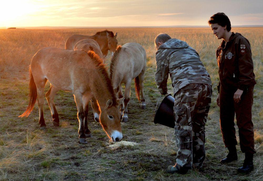 俄联邦总统普京与普热瓦利斯基野马