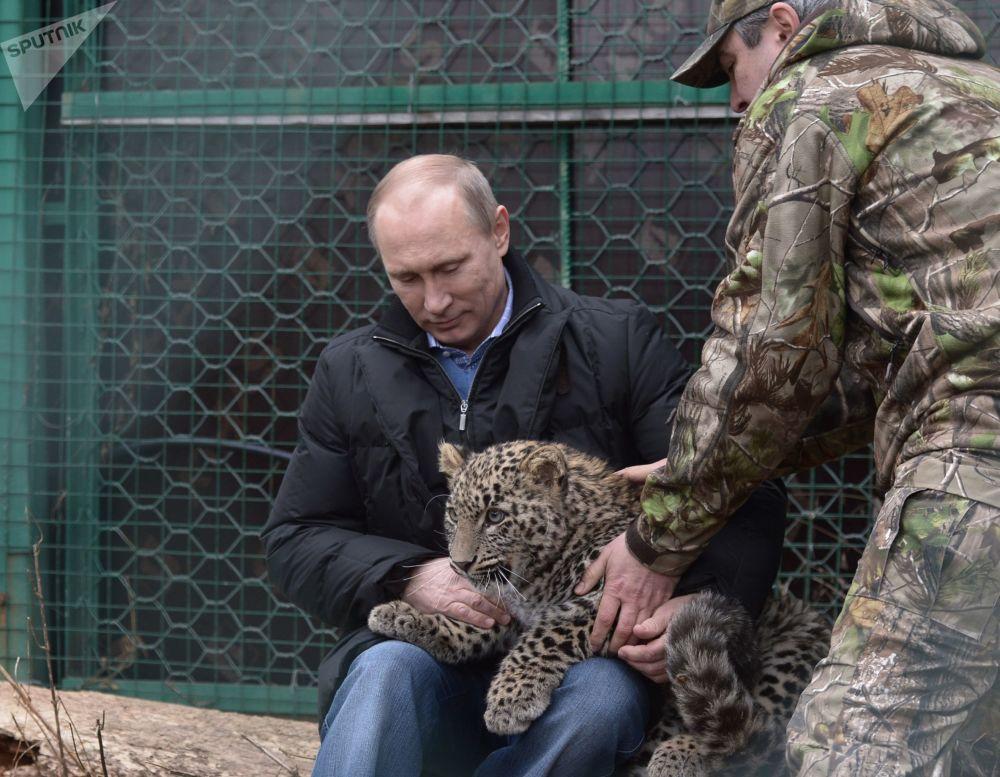 俄联邦总统普京抱着豹子