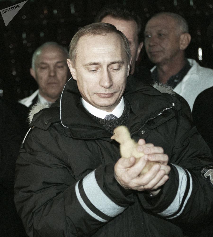 俄联邦总统普京抱着小鸡,2000年