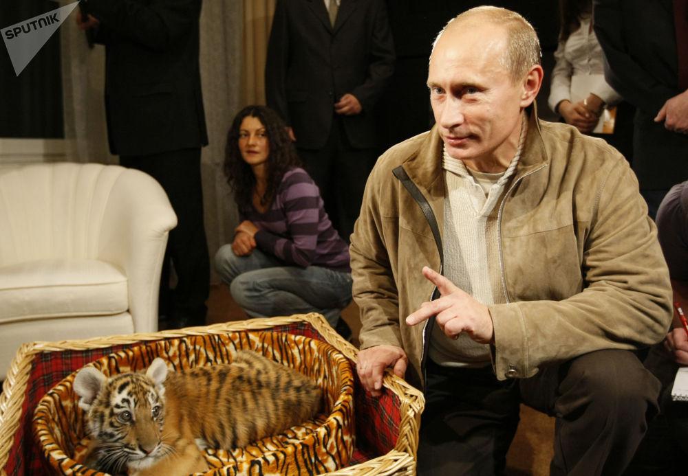 俄联邦总统普京向记者们展示他收到的礼物 – 一只小老虎