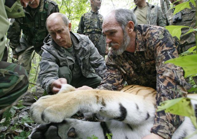 世界自然基金会:中国居民喂食俄总统放生的老虎