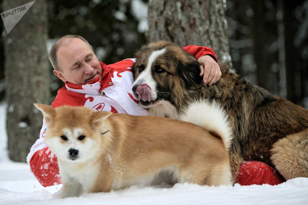 """俄总统普京与宠物狗""""巴菲""""和""""梦"""""""