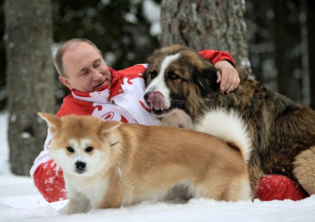 普京签署人道对待动物的法律