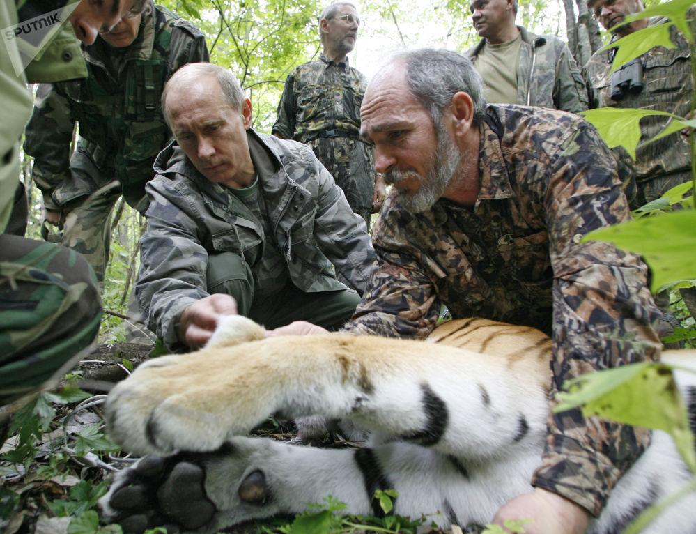 普京在到访乌苏里斯克自然保护区时看望一只母虎