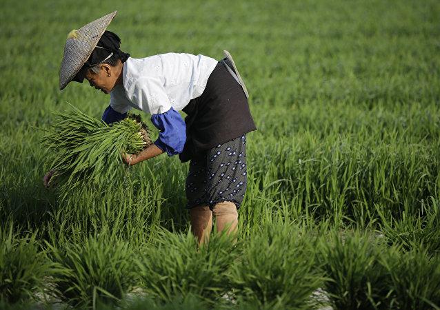 中国首次允许从美国进口大米