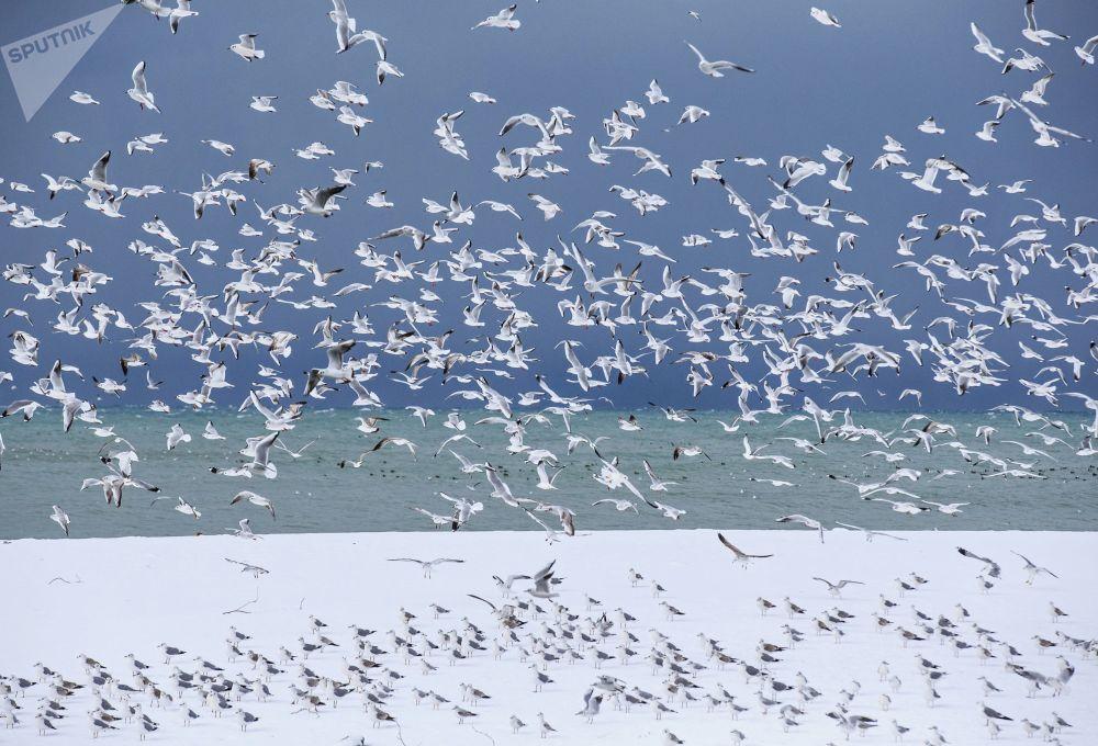 索契海岸的鸟儿