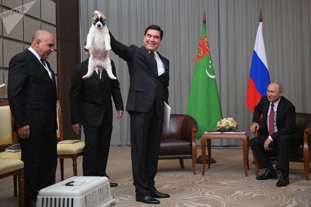 俄罗斯卫星通讯社十月最佳照片