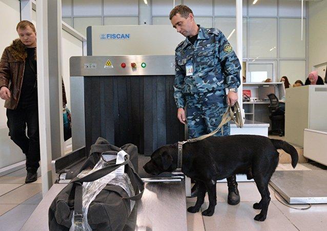 多莫杰多沃机场的海关搜查犬被教通过气味分辨欧元和人民币