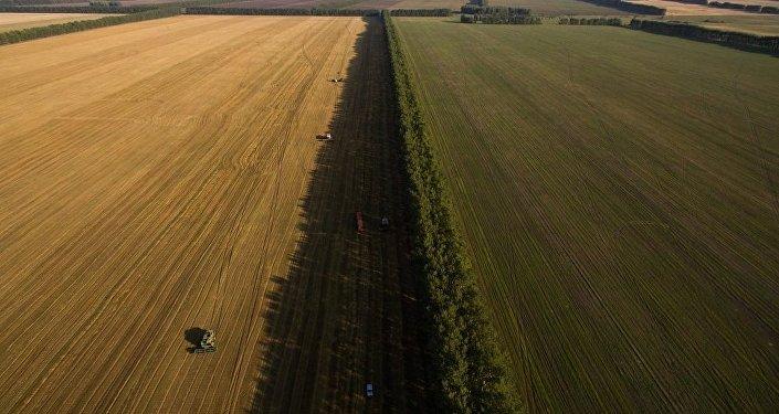 改良农耕每年可减排10亿吨温室气体最新发现与创新