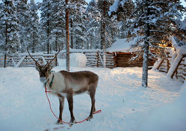 芬蘭薩米地區12月將迎來航班高峰,其中包括來自中國的航班
