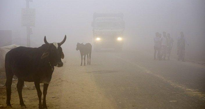 印度德里地区空气污染指数小幅下降