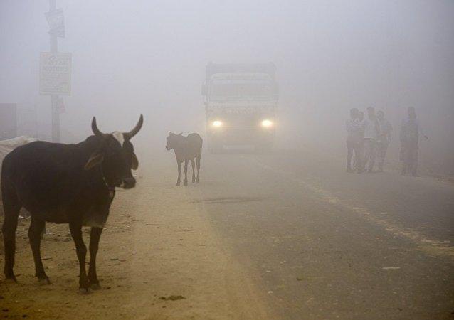 印度新德里市民未受危险空气污染的影响