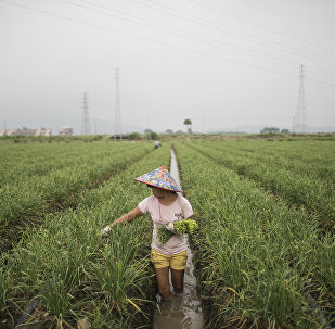 中國不會實行土地私有制,但耕地承包期將延長30年