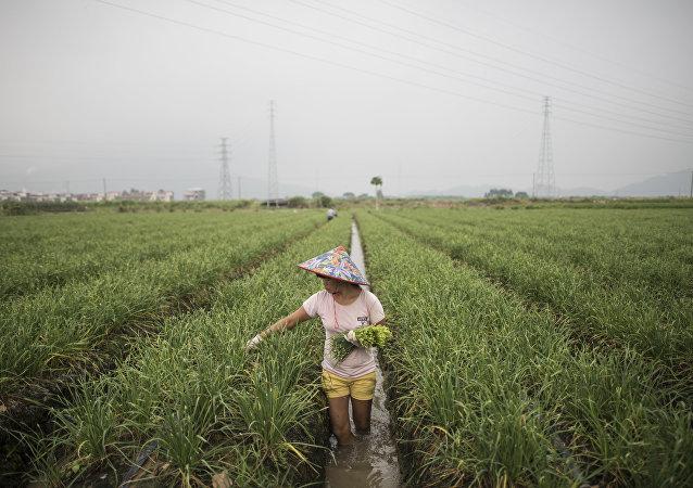 白皮书:中国实现脱贫近1亿贫困人口中妇女约占一半