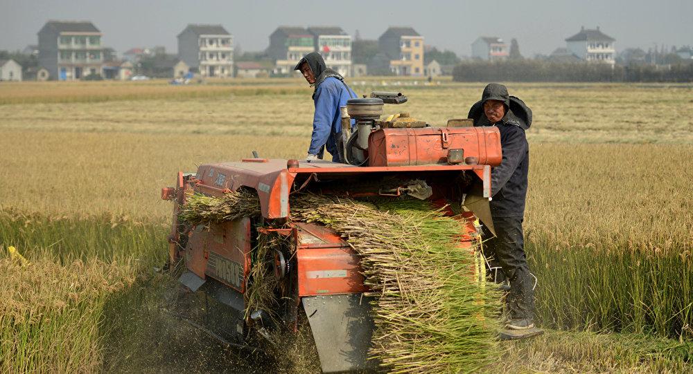 按照正式统计数字,现在大约有30%的农户把土地交给信托管理,总共将近有3200万公顷的耕地签有流转合同。虽然农民工进城务工已经不再像上世纪80年代末和90年代初时一样踊跃,但涌往城市的民工流依然很大。