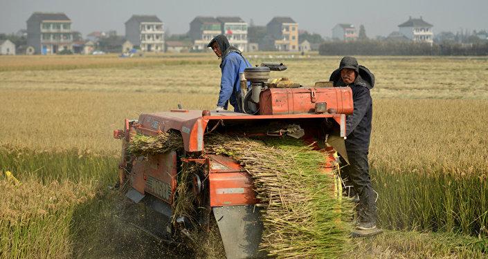 按照正式統計數字,現在大約有30%的農戶把土地交給信託管理,總共將近有3200萬公頃的耕地簽有流轉合同。雖然農民工進城務工已經不再像上世紀80年代末和90年代初時一樣踴躍,但湧往城市的民工流依然很大。