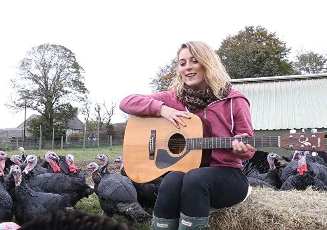 女農場主為火雞彈吉他,希望火雞孵蛋效果更好