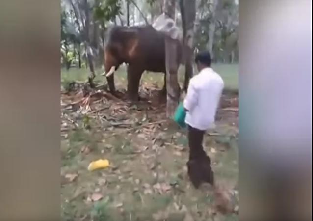 印度的一头大象将一名试图爬到它身上的男子抛开(视频)