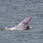 三亚海上机场项目因威胁白海豚栖息而遭暂停