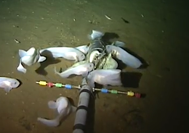 學者展示世界上生存環境水深最大的魚類的視頻