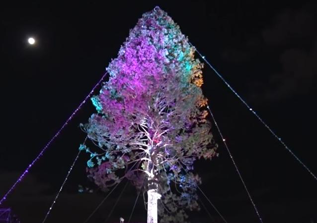 日本点燃世界上最高的云杉树