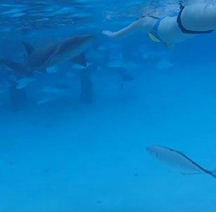 一名美国人拍下鲨鱼攻击自己妻子的视频(视频)