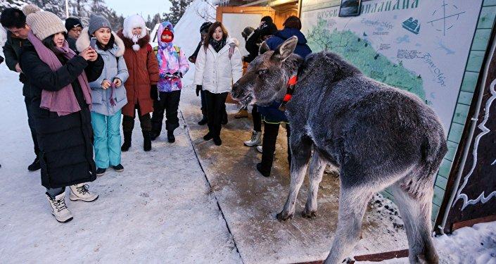 住在萨米民族村里,那儿有当地的鹿肉饭,俄罗斯人给你做,喝鱼汤,住在小木屋里面