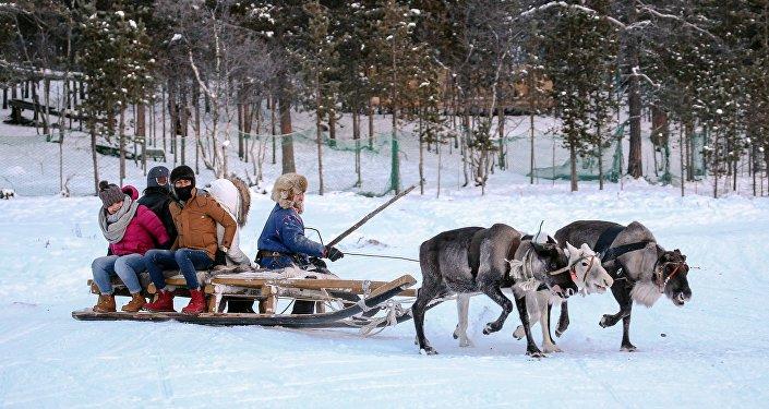 中国游客在萨米民族村牵着驯鹿走过