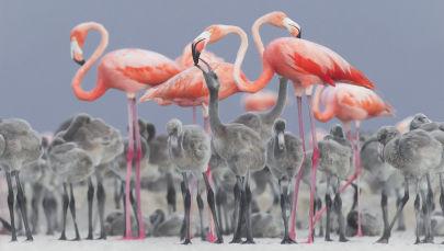 攝影師Alejandro Prieto作品,獲得野生動物組二等獎