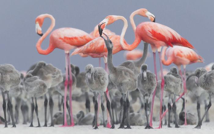 摄影师Alejandro Prieto作品,获得野生动物组二等奖