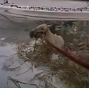贴身摄像头记录下一名美国警察是如何掉入冰水中的
