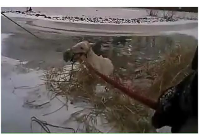 貼身攝像頭記錄下一名美國警察是如何掉入冰水中的