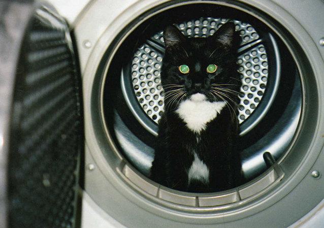 挪威一只猫被关入洗衣机内40分钟仍然生还