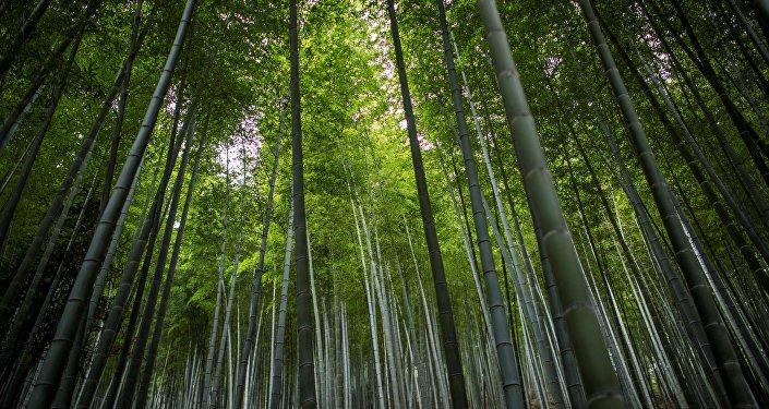 中國在環保領域走在世界前列