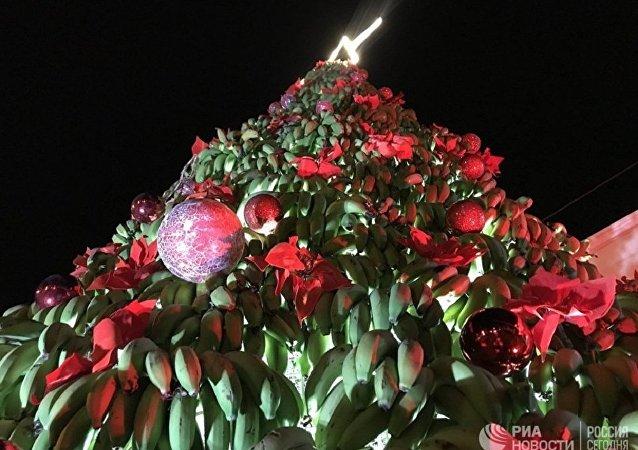 黎巴嫩一市政府立起由上吨香蕉组成的圣诞树