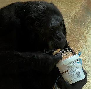 德国动物园的动物们收到神秘圣诞老人的礼物