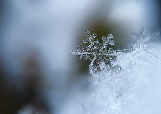 生态学家对圣彼得堡出现蓝雪的原因进行调查