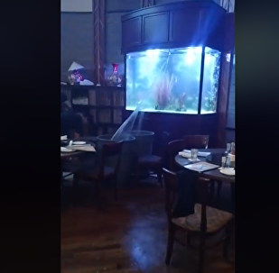 餐厅水族箱破裂 服务员用垃圾桶接水救急