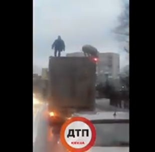 有人在基輔近郊拍下一名男子和豬在車頂上戰鬥的視頻